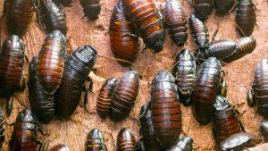 böceklerden kurtulma, böcek ilaçlama, böceklerden nasıl kurtulunur