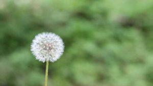 polenlerden korunma, polenlerden nasıl korunulur, polenlerden korunma yöntemleri