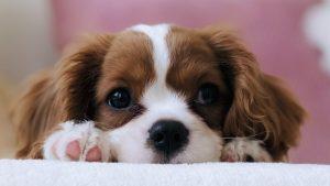 köpeklere oyun saati ayırma, köpeklerle oyun oynama, köpek ve sahibi arasında bağ kurma