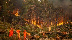 türkiye yangınları, yangın çıkma nedenleri, yangın niye çıkar
